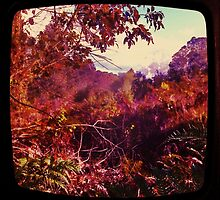 Nannup  Western Australia by Jules Campbell