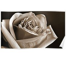 Lovely petals Poster