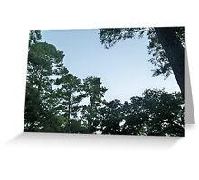 Forest sky Greeting Card