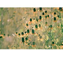Yellow Prairie Mexican Hat Coneflower Meadow  Photographic Print
