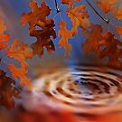 The Leaves Of Fall  by CarolM