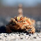 Thorny Devil (Moloch horridus) by David Baird