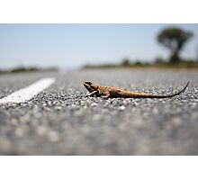 Lazy Road Lizard Photographic Print