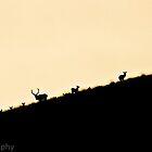 Stag at Dawn by cj1970