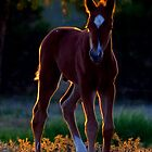 Evening foal - iphone case by Penny Kittel