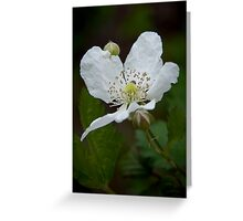 """Wild Blackberry Bloom"" Greeting Card"