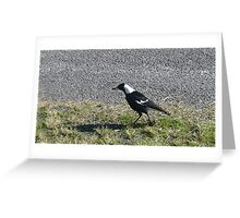 Myall Magpie Greeting Card