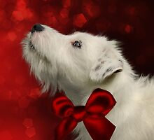 White Jack Russell with Red Bow by Ethiriel