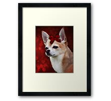 Chihuahua with Red Bow Framed Print
