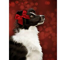 Collie on Bokeh with Big Red Bow Photographic Print