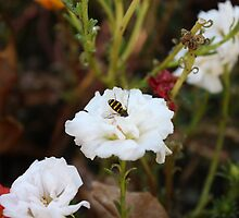 That Busy Bee! by Cherie Balowski