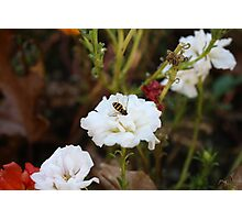That Busy Bee! Photographic Print