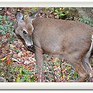 Coy Deer by Imagery