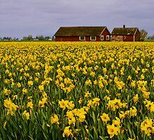 Countryside by Dan Mihai