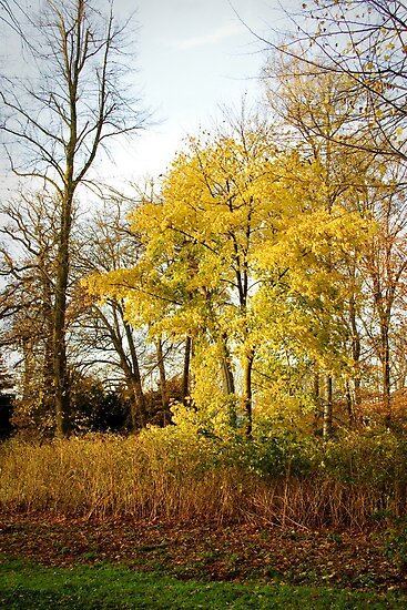 """""""As we let our own light shine..."""" - Little yellow tree by steppeland"""