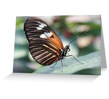 The beautiful butterfly Greeting Card