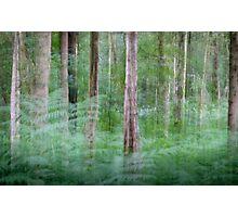 Woodland Impressions Photographic Print