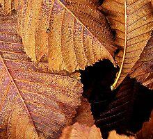 Autumn Leaves by PhotoLouis