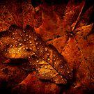 Autumn Shades by James Coard