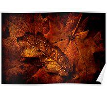 Autumn Shades Poster