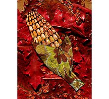 CORN AND THANKSGIVING Photographic Print