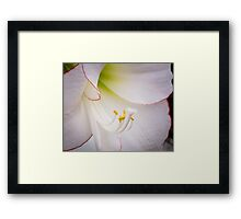 The Heart of a White Amaryllis Framed Print