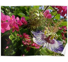 Colourful wild nature - wild blossoms and flowers in the tropics Poster