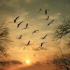 AN AUTUMN SUNSET by TOM YORK