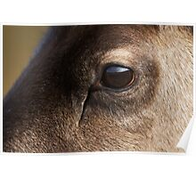 Reindeer Eye Poster