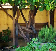 The Grape Vine Pathway by HeavenOnEarth