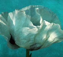 aquatic by Iris Lehnhardt