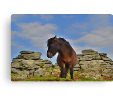 Dartmoor: 'This is my Best Side' Canvas Print