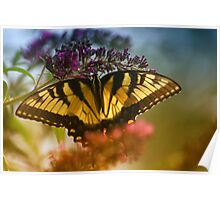 "Tiger Swallowtail ""1"" Poster"