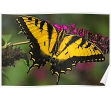 "Tiger Swallowtail ""2"" Poster"