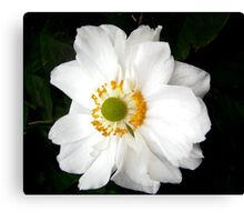 Governor General's rose 15 Canvas Print