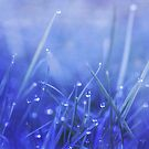 sparkling by Priska Wettstein