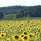 Sunflowers by Annlynn Ward