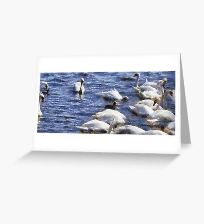 Swans, Abbotsbury, Dorset, UK Greeting Card