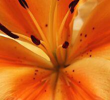 IPhone Case: Flower, Orange by Doty