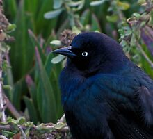Black Bird by nicolestamsek