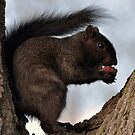 Black Squirrel by MaryLynn