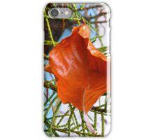 A Fallen Sycamore Leaf iPhone Case/Skin