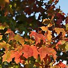 Leaves of Fall by MaryLynn