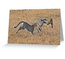 Young Female Leopards Playing Greeting Card