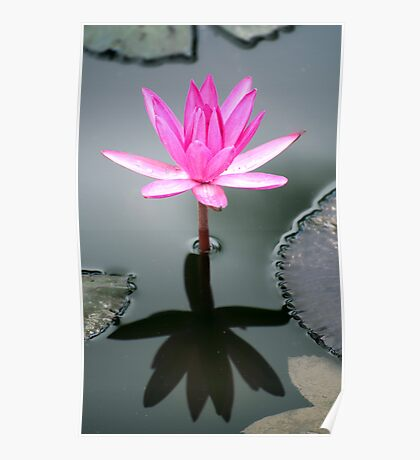 Tropical Diva - waterlilly flower Poster