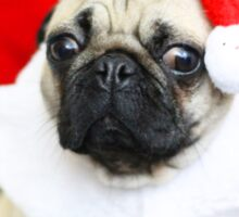 CHRISTMAS PUG Sticker