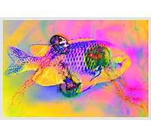 A bad fish dream Photographic Print