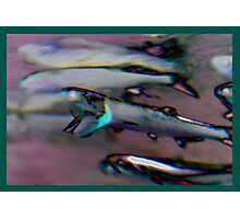 Anchovies Photographic Print