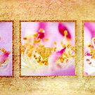 Rosy Triptych by KathyT