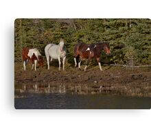Hoofing up to the watering hole Canvas Print